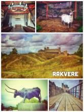Rakvere Castle -
