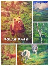 Polar park - northernmost wildlife park in the world - one of the best in Europe